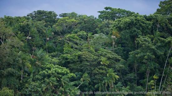 生长茂盛的热带雨林。