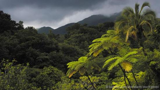 雨林在湿热环境下生长繁盛。