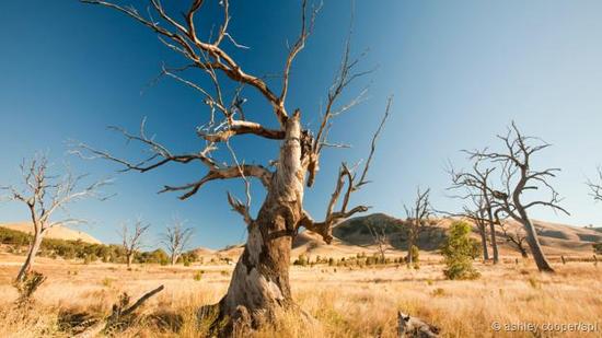 气候变化导致全球许多地方出现严重干旱。