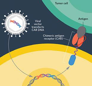 通过对T淋巴细胞进行修饰,使嵌合抗原受体(chimeric antigen receptors,CARs)得到表达,科学家能够使细胞识别并杀死那些逃过免疫系统的肿瘤细胞。嵌合抗原受体能够识别癌症特异性的抗原。这一过程涉及到提取病人的T细胞,将一个嵌合抗原受体的基因转入,然后把转入后的细胞注入到病人体内