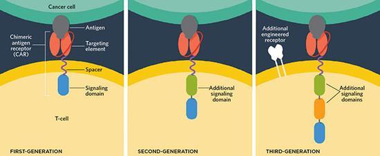 齐利格?伊萨哈和斯蒂芬?罗森伯格利用模块设计的方式构建了第一种CAR-T细胞,包括一种细胞外的特异性靶向癌细胞的抗体、一种膜运输组件和一种能加强CAR-T细胞活动的胞内共刺激信号域。第二和第三代CAR-T细胞技术增加了细胞内的共刺激信号域,同时也增加了受体的数量,使T细胞攻击的靶向更加准确,减少副作用。