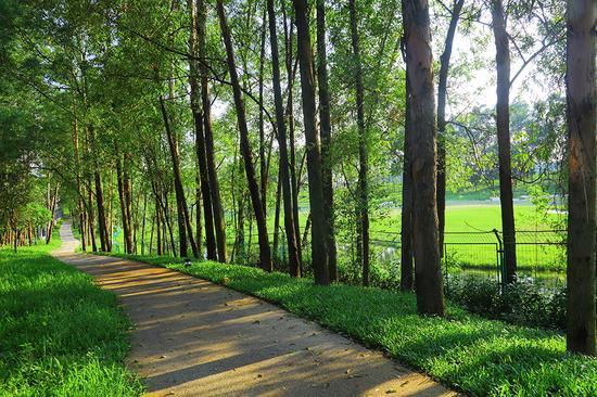 巢湖半岛最美绿道