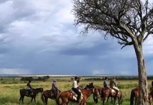 肯尼亚马赛马拉