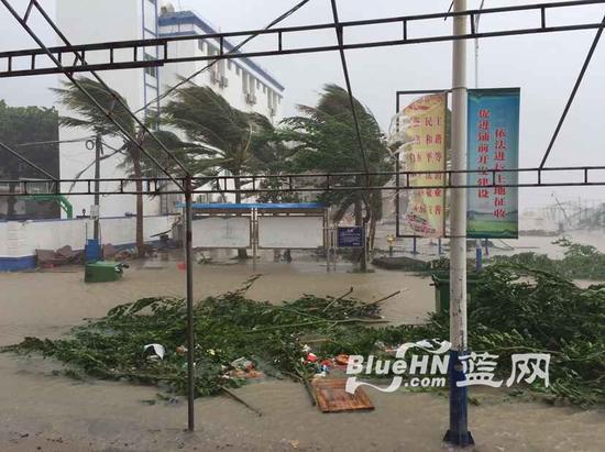 文昌铺前仍是狂风暴雨,许多树木被刮倒(蓝网记者 陈锐摄)