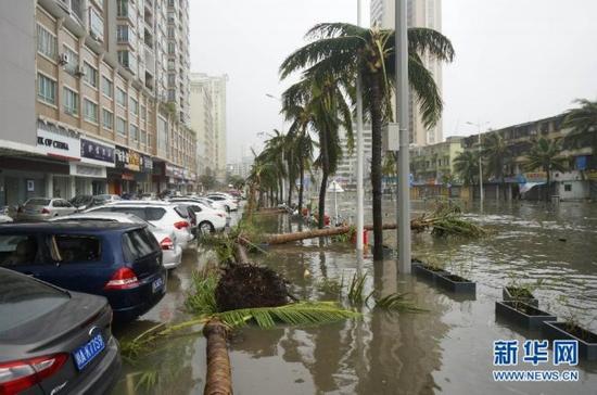 10月4日,广东湛江市区树木被台风刮倒。