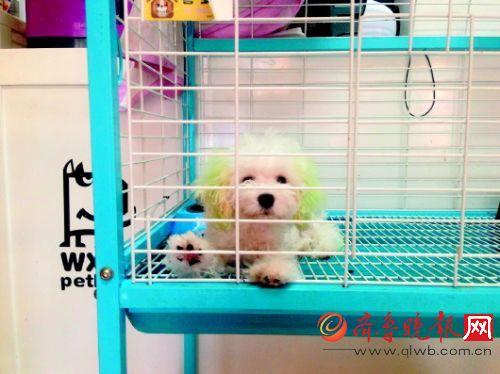 寄养在宠物店里的狗狗