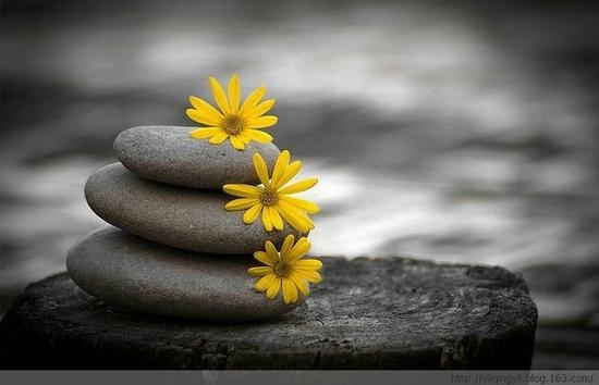 内心的平静和智慧就是美
