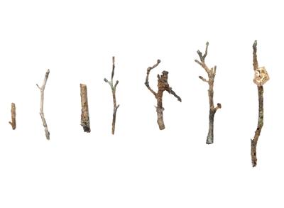 """""""被遗忘的美""""系列胸针 Attai Chen 阿泰·翰 善于将""""可轻(随处可见,易被轻视)""""之物,如树枝、碎木、纸张、锈金属等打造成艺术首饰。"""