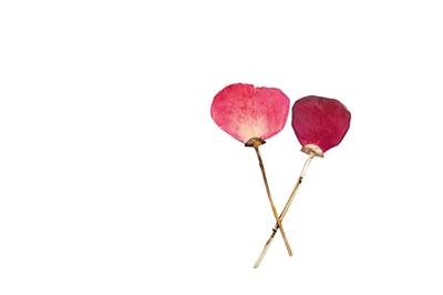 玫瑰系列耳环和胸针  Esther Knobel 艾斯蒂·可诺贝尔  花瓣、树叶和松针,作为难忘的童年记忆频频出现在她的作品中。