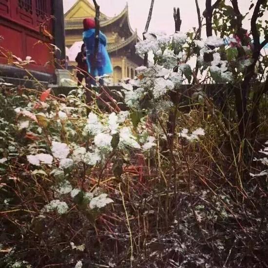 峨眉山下雪