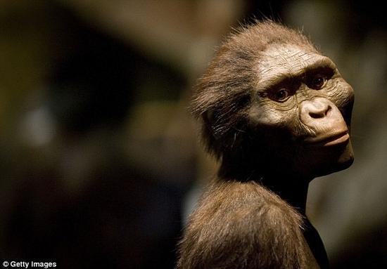 """该研究认为,我们早期的祖先——包括著名的古人类化石""""露西""""在内——已经能够用和现代人类相同的方式,通过对躯干的控制来提高行走效率。"""