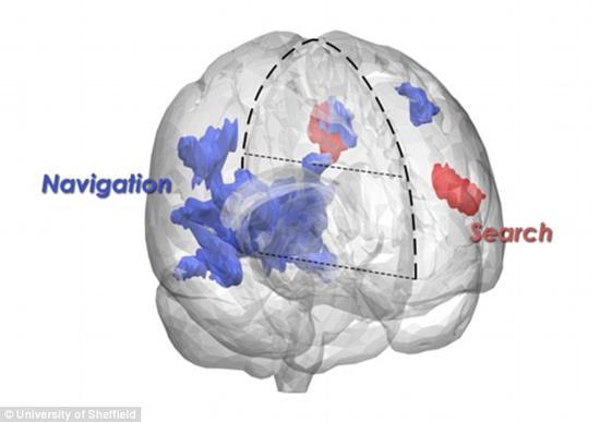 人搜索文件与狗寻找食物使用的大脑区域相似