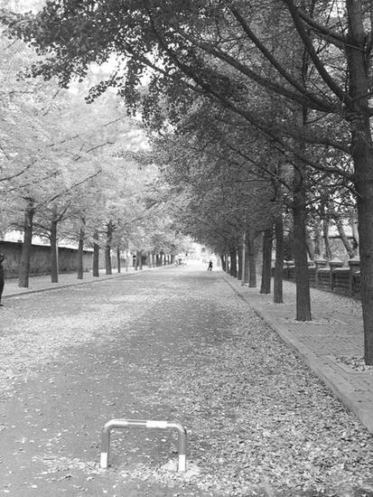 落叶不扫走,留着给人观赏。