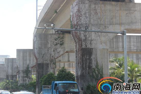南海大道高架桥墩上的爬山虎已经枯萎。