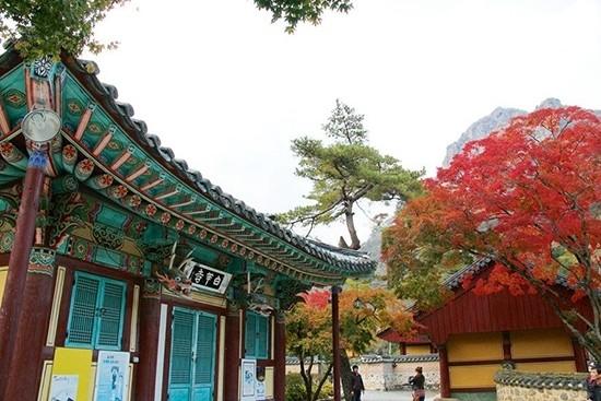韩国赏枫蜜月之旅