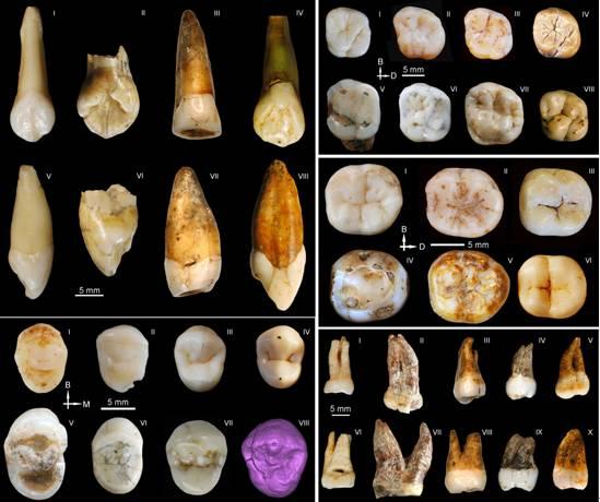 图1:道县古人类牙齿与其他古人类牙齿的横向比较。(详见原文)