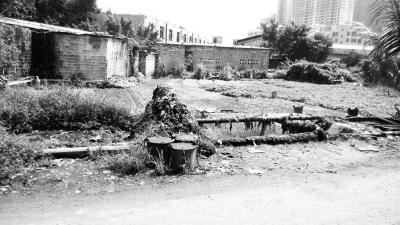 建在路边的露天化粪池