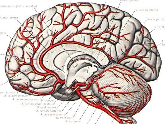 大脑结构(新浪科技配图)