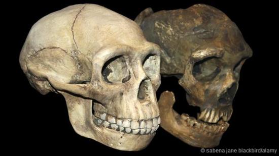 尼安德特人与现代人多次混种交配。