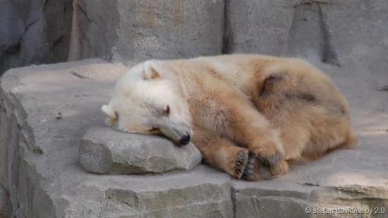 杂交熊具备混合特性。