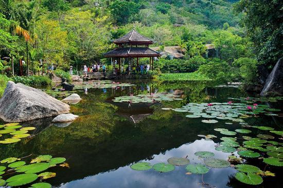 图为游客在生态优美的热带天堂兰花谷游玩