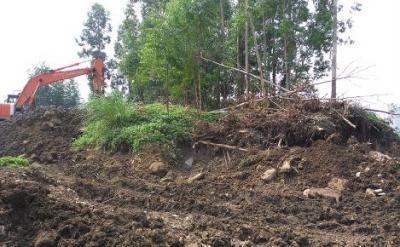 ▲被毁坏的桉树
