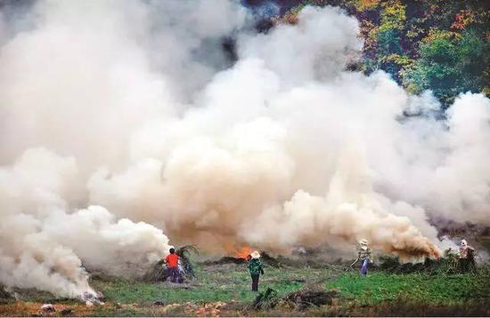 森林淹没在烧秸秆的浓烟中