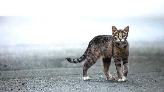 梦见抓野猫还总是逃跑