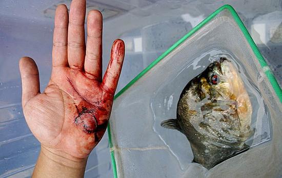 柳州食人鱼事件