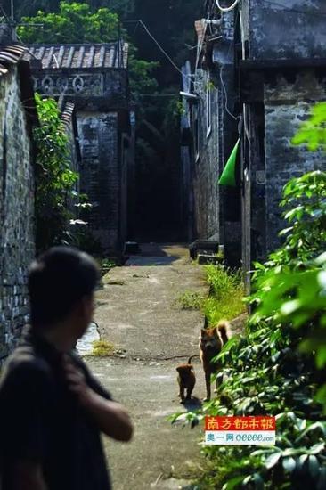 22日下午,杜阮镇上巷村。抬出尸体的巷子里仍然有股强烈的腥臭味。南都记者 孙振飞 摄