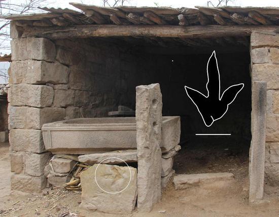 羊圈挡板上的足迹化石