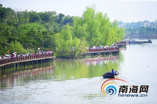 在海口市演丰东寨港红树林,游客漫步栈道欣赏生态美景。本报记者张杰摄
