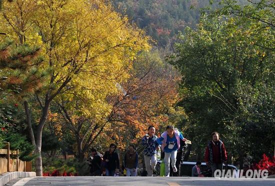 10月24日,北宫国家森林公园彩叶节举行。图为游客在公园内感受最美的北京金秋