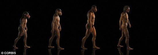 拉斯特指出,这种过渡非常关键,其重要性不亚于猴子到猿,以及猿到人的进化。