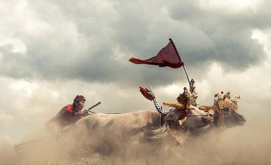 水牛大赛:巴厘岛西部每年都会举行传统水牛大赛。成千上百只水牛两两组成一队,骑师则坐在传统木犁上进行驾牛比赛。(网页截图)