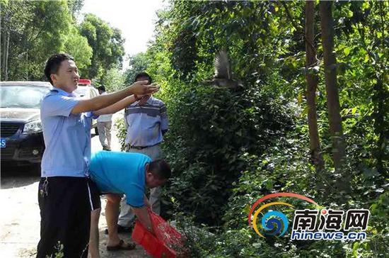 民警在放生黑水鸡(临高县森林公安局提供)