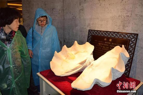 图为深圳弘法寺重要信物砗磲在地宫内展出。