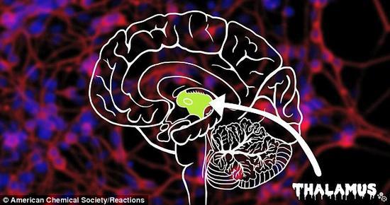 恐惧被认为受形成下丘脑室旁核的一簇神经元控制。