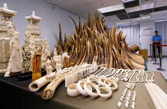 2014年5月15日,香港化学废物处理中心展出了没收的象牙制品。香港已启动以焚化方式销毁近 30吨库存没收象牙的行动