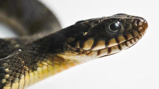 并不是所有的蛇都是有毒的