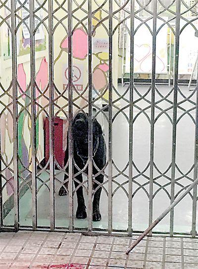 30日,沙坪坝土湾,一条大黑狗跑进一家幼儿园。本报记者 雷键 摄