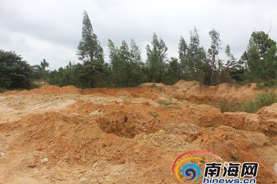 林地被挖得坑洼不平。南国都市报记者王渝摄