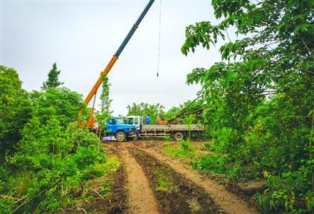 砍树时曾出动大型机械