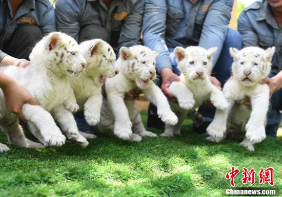 http://n.sinaimg.cn/news/1_img/vcg/72f96829/245/w821h1024/20181029/5ZT2-hnaivxq2567346.jpg