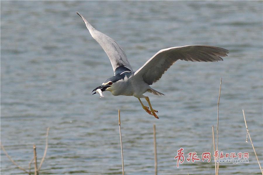 习近平出席中国北京世界园艺博览会开幕式