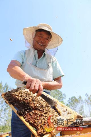 酂城镇:养蜂产业为农民带来甜蜜生活