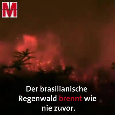 巴西总统影射是NGO放的火,为了得到更多的捐款。真的是丧心病狂