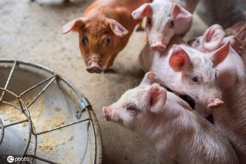 <b>北京猪肉批发价17.25元 降至近30天最低点|猪肉</b>