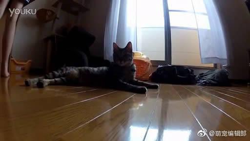 【生活记录】一枚善于跳跃的猫咪