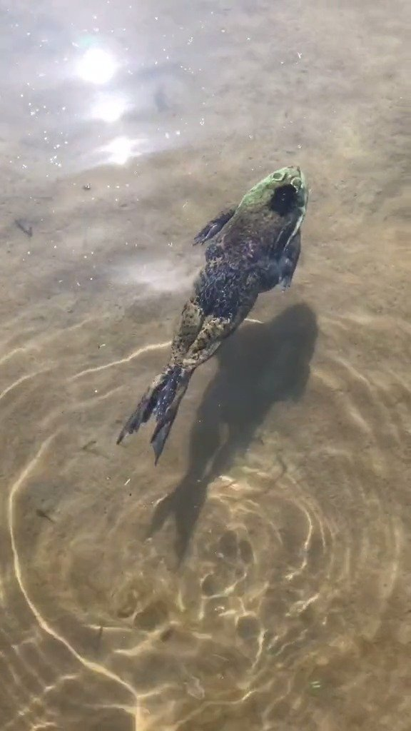 近距离手把手教你如何蛙泳,学会了吗?不会游泳的看过来了